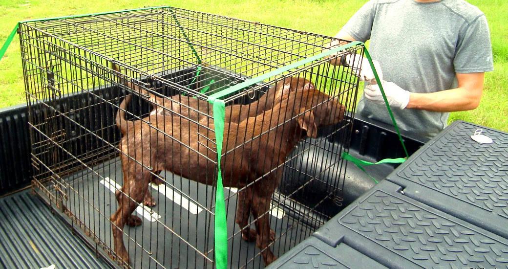 Abandoned dogs