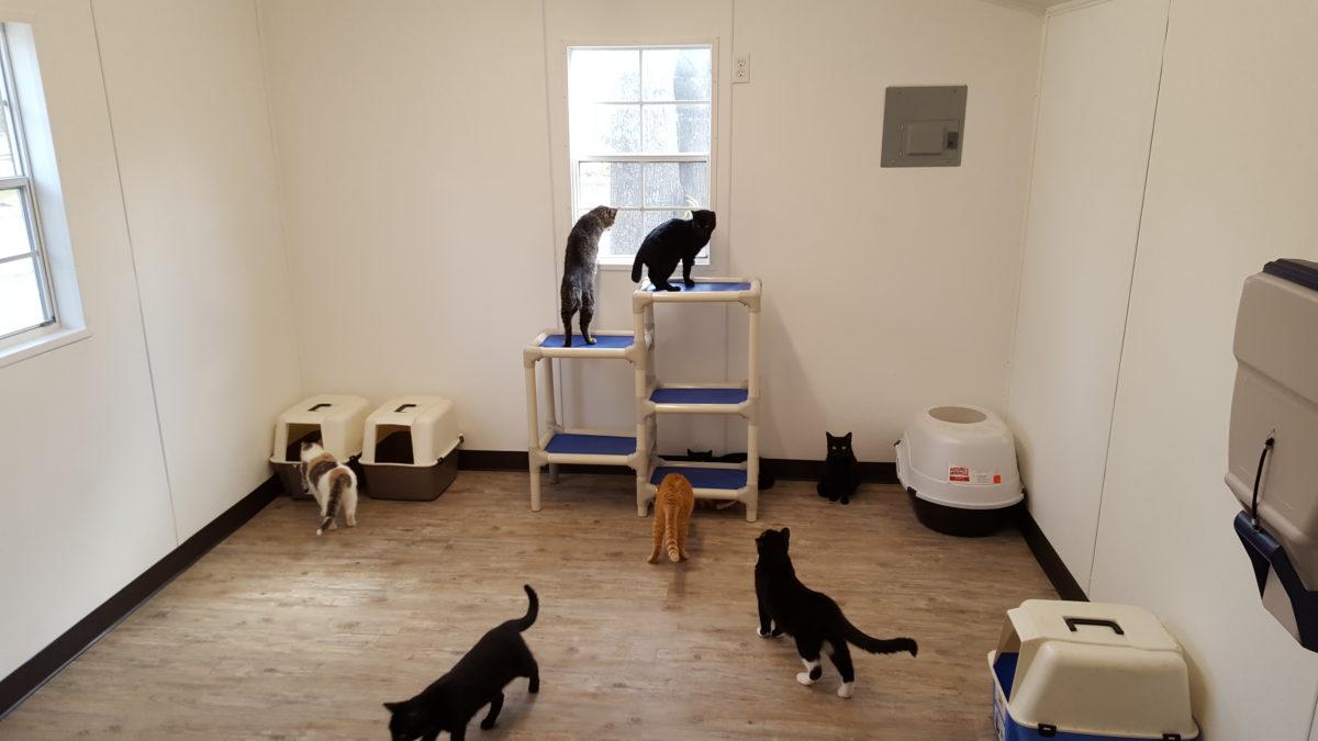 Cat Cottage After