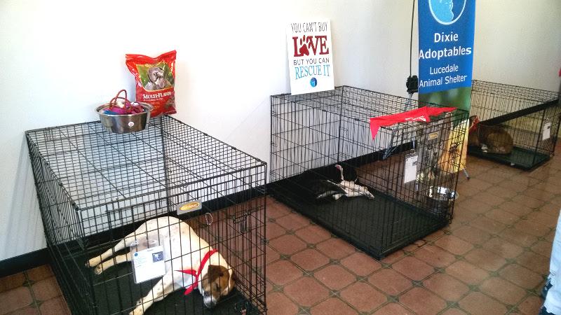 Dixie Adoptables Pets